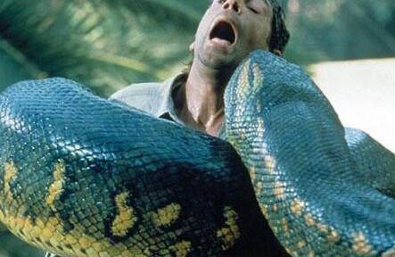 动物世界之最大的蛇_世界上最长的蛇-奇闻异事-帅酷网